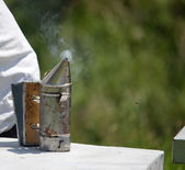Biene raucher — Stockfoto