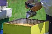 Apicultor com fumantes de abelha — Foto Stock