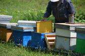 Apicultor con nuevo panal de miel — Foto de Stock