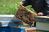 Apicultor con panal de miel — Foto de Stock