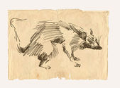 Rat drawing on old paper — Stock Photo