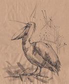 Pelican monochrome sketch — Stock Photo