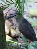 Kuala Lumpur Bird Park — Stock Photo