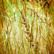 Autumn Grasses — Stock Photo #20100399