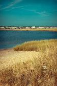 河口とケープコッド、マサチューセッツ州の沿岸地域におけるイネ科牧草 — ストック写真