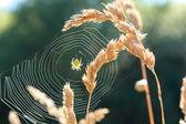 Spider`s web — Stock Photo