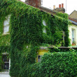Stock Photo: House covered in ivy