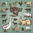 Farm animals vintage set (vector) — Stock vektor