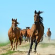Running Horses — Stock Photo #14698855