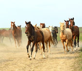 Running Horses — Stock Photo