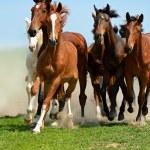 Horse — Stock Photo #16990735