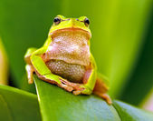 Frog on a branch — Stock Photo