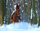 Girl with a horse — Stock Photo