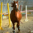 Horse in the arena - Stock Photo