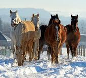 馬のギャロップで急ぐ — ストック写真