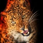 Leopard — Stock Photo #18610941
