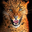 Leopard — Stock Photo #18649283