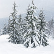 Stock Photo: Frosty day in mountains Carpathian