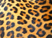 Leopardo — Foto Stock