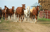 Cavallo — Foto Stock