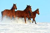 Horse — Stock fotografie