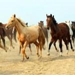 Horse — Stock Photo #22994542