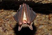 Bat cave — Stock Photo