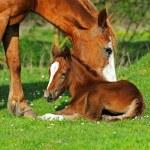 Horse — Stock Photo #23810595