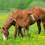 Horse — Stock Photo #24383143