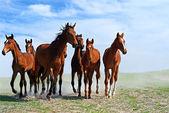 馬 — ストック写真