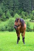 лошадь. — Стоковое фото
