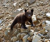 Little Bear — Стоковое фото