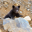 Little Bear — Stockfoto