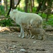 Stock Photo: Wolf with cubs in forest