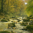 The mountain river in the forest — Stock Photo
