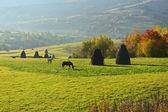 Bir mera otlayan atlar — Stok fotoğraf