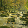 The mountain river in the forest — Stock Photo #34489991