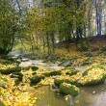 The mountain river in autumn forest — Φωτογραφία Αρχείου