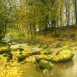 The mountain river in autumn forest — Stok fotoğraf