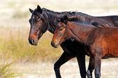 Horses on the farm in summer — Stock Photo
