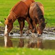 Horse on pasture in the summer — Stock Photo