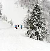 A pie de esquí en las montañas cárpatos — Foto de Stock