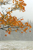 First snow on the fallen leaves — Stock Photo