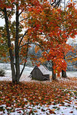 First snow on the fallen leaves — Stock fotografie