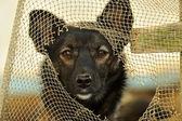 Portrait of a domestic dog — Stock Photo