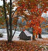 первый снег на опавшие листья — Стоковое фото