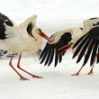 Stork in its natural habitat — Stock Photo #38621887