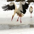 Stork in its natural habitat — Stock Photo #39567149