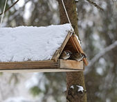 Sparrows in a manger — Stockfoto