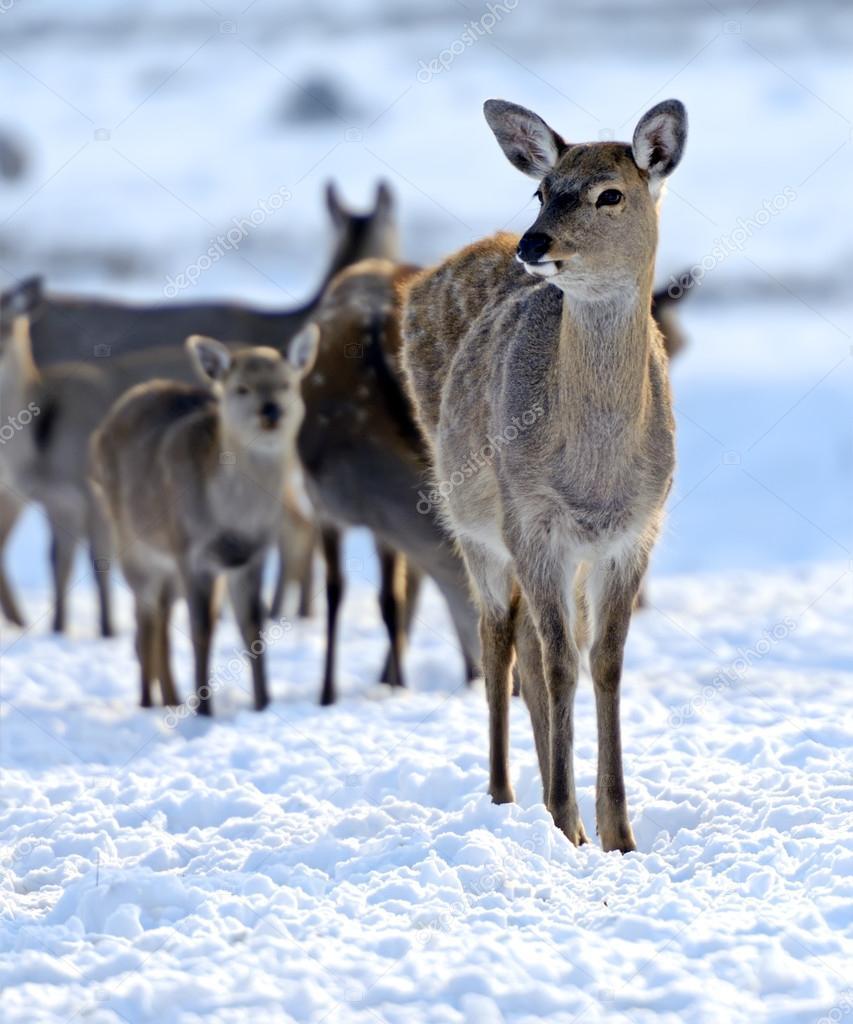 一群动物照相图片
